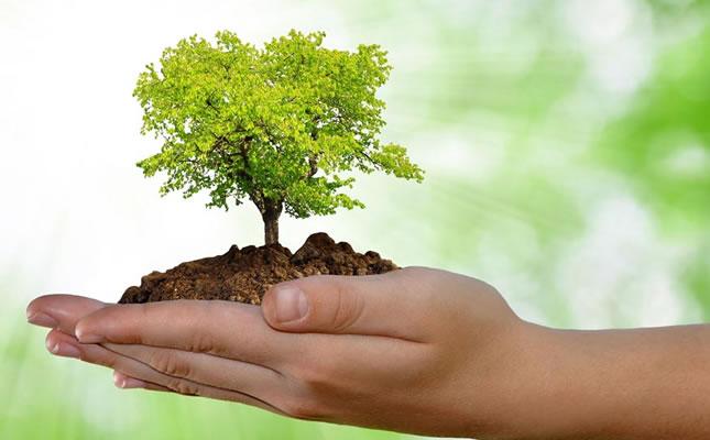 preservar-meio-ambiente